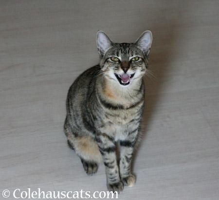 I didn't do it! - 2014 © Colehaus Cats