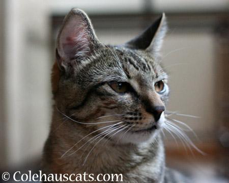 Viola's story - 2014 © Colehaus Cats