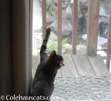 I was stuck elsewhere all day! - 2014 © Colehaus Cats