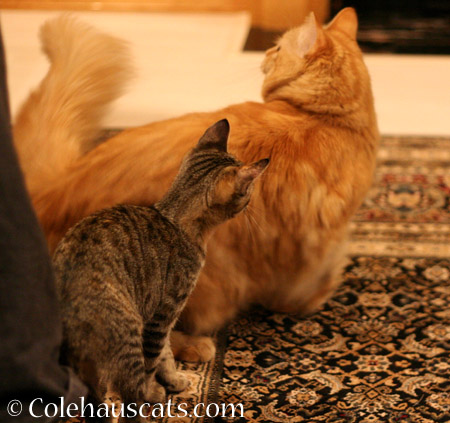 Ginger Princess and The Squirt  - 2014 © Colehaus Cats