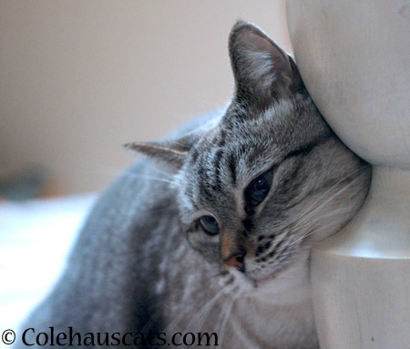 Loves the bedpost - 2014 © Colehaus Cats