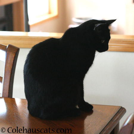 On the table - 2014 © Colehaus Cats