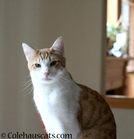 Quint's influence - 2014 © Colehaus Cats