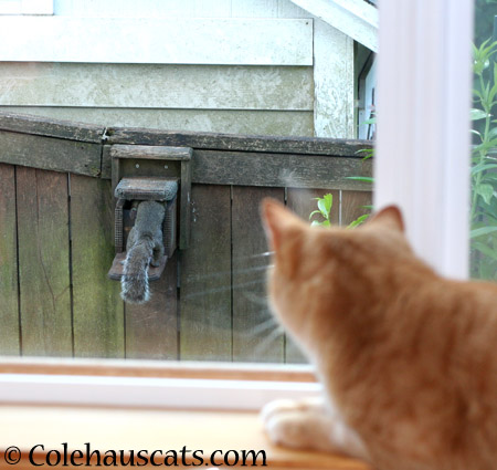 Intruder spotted! - 2014 © Colehaus Cats