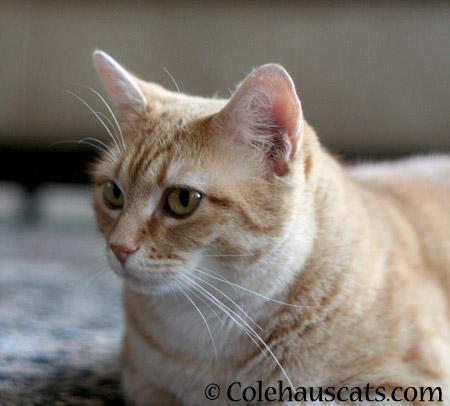 Keeping an eye out - 2014 © Colehaus Cats