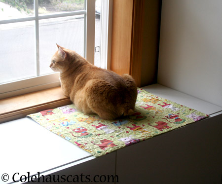 Always on the look out - 2014 © Colehaus Cats