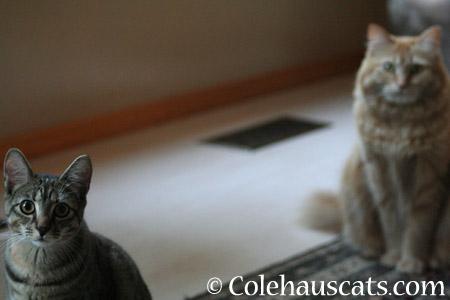 Dexter who? - 2014 © Colehaus Cats