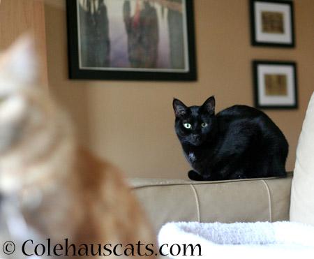 Always watching - 2014 © Colehaus Cats