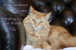 Pia loves Dexter - 2014 © Colehaus Cats