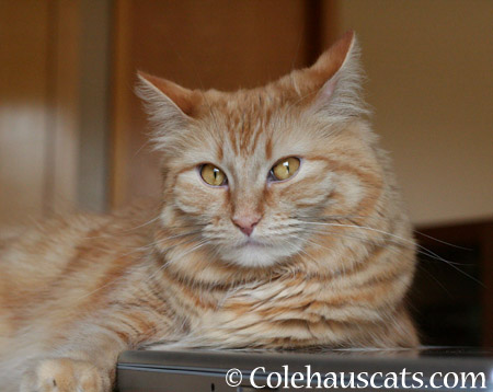 Pia says - 2014 © Colehaus Cats