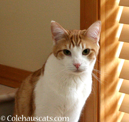 Quint, always with one eye on the seasons - 2014 © Colehaus Cats