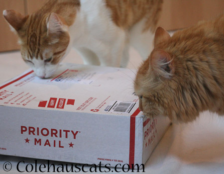 Pia gets a package - 2014 © Colehaus Cats