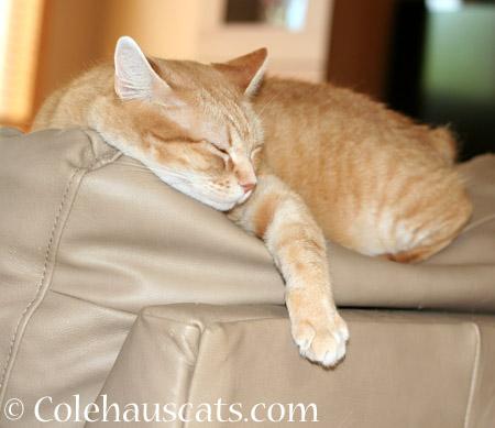 Zuzu's favorite spot - 2014 © Colehaus Cats