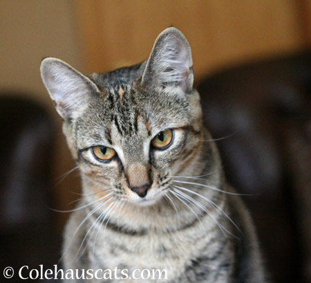 Bored Viola - 2014 © Colehaus Cats