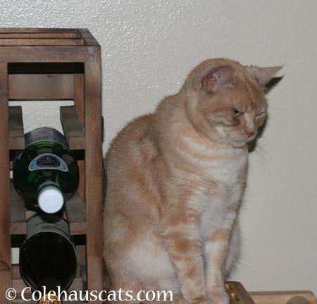 Unusually grumpy Miss Newton - 2014 © Colehaus Cats