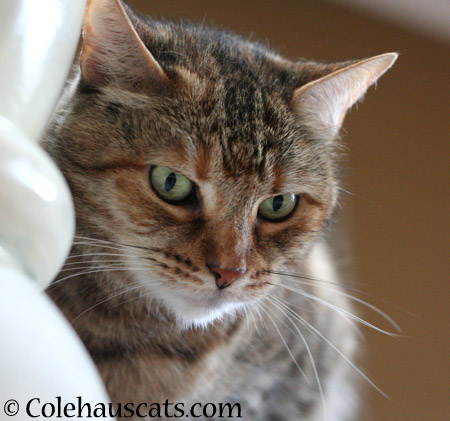 Pretty Ruby - 2014 © Colehaus Cats