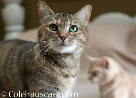 Ruby and Miss Newton - 2014 © Colehaus Cats