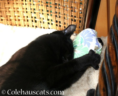 Olivia loves Dexter's Pillow - 2014 © Colehaus Cats