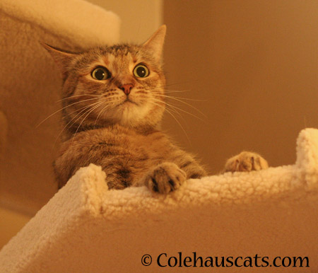 Ruby rethinks her decision - 2014 © Colehaus Cats