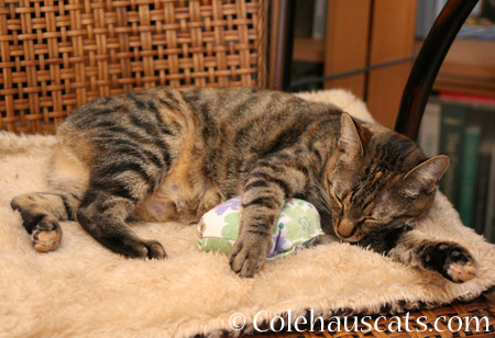 Really loves Dexter's pillow - 2014 © Colehaus Cats