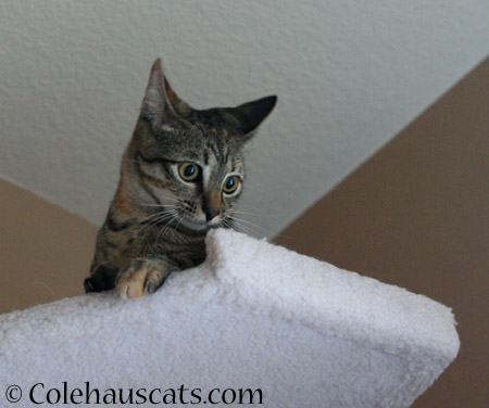 "Did someone say, ""Treats?"" - 2014 © Colehaus Cats"