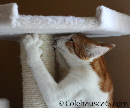 Quint keeps in shape - 2014 © Colehaus Cats