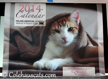 Quint, the Cover Boy - 2014 © Colehaus Cats