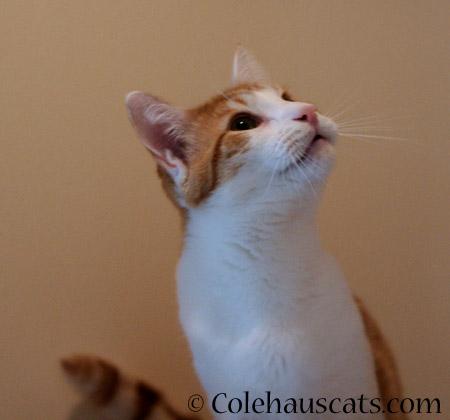 Quint - 2014 © Colehaus Cats