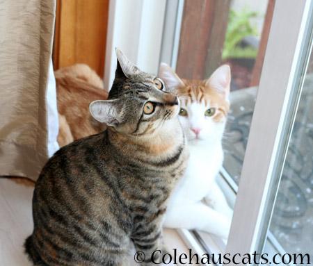 Viola and Quint - 2014 © Colehaus Cats