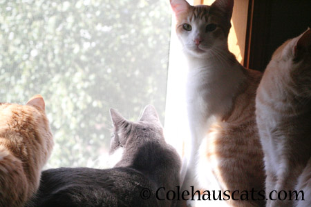 Every home has one - the Lookout - 2014 © Colehaus Cats