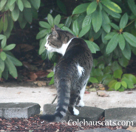 Mustacheo - 2014 © Colehaus Cats