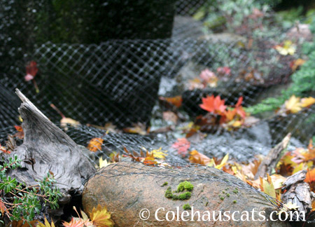 Leaves on the netted fountain - 2014 © Colehaus Cats