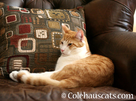 Chilling with Quint - 2014 © Colehaus Cats