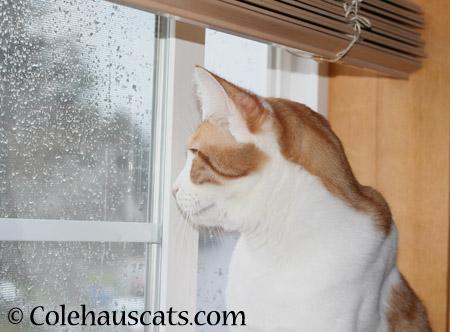 Rainy day Quint - 2014 © Colehaus Cats