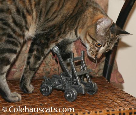 Viola prepares the Trebuchet - 2014 © Colehaus Cats