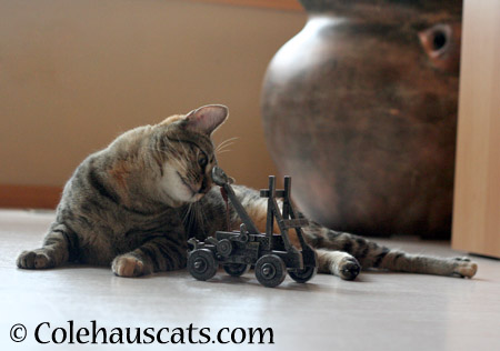 Checking the angle - 2014 © Colehaus Cats