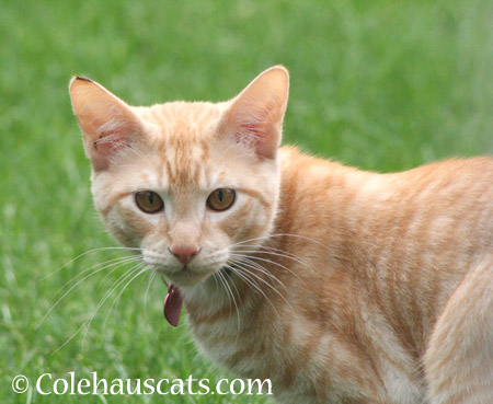 Whittles - 2014 © Colehaus Cats