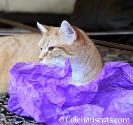 Litter patrol - 2014 © Colehaus Cats