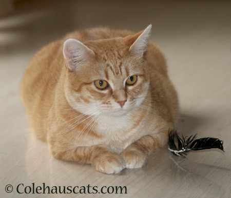 Feather patrol - 2014 © Colehaus Cats