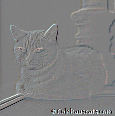 Creative Photoshopping with Miss Newton - 2014 © Colehaus Cats