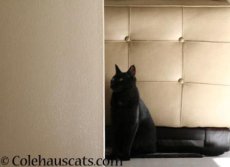 Not a fan of beige - 2014 © Colehaus Cats