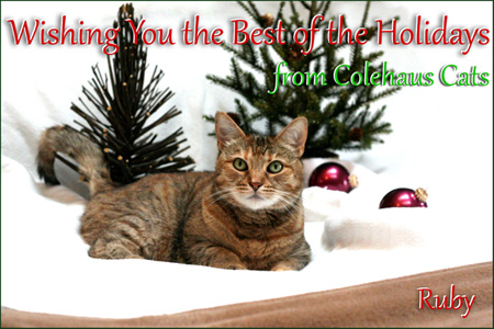 Ruby's Christmas Card  - 2014 © Colehaus Cats
