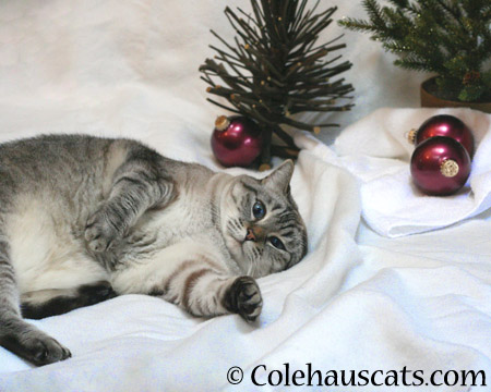 Have a Crazy-Eyed, One-Ear Christmas - 2014 © Colehaus Cats