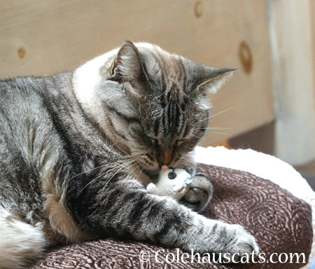 Maxx with Mousie  - 2014 © Colehaus Cats