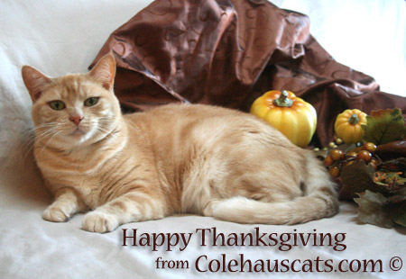 Giving thanks with Miss Newton  - 2014-2016 © Colehauscats.com