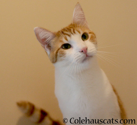 Sleigh bells ring, is Quint listening? - 2014 © Colehaus Cats