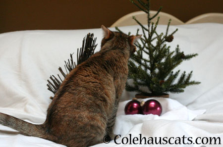 Oh, nom-able tree, oh, nom-able tree - 2014 © Colehaus Cats