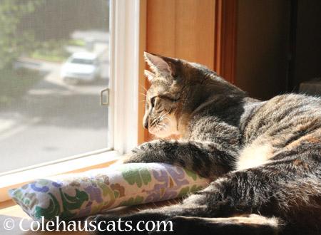 Viola shares a sunpuddle - 2014 © Colehaus Cats