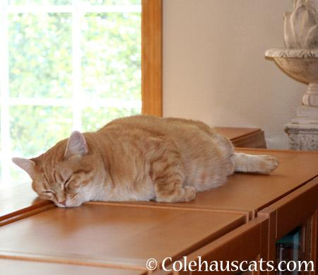 Zuzu naps - 2014 © Colehaus Cats