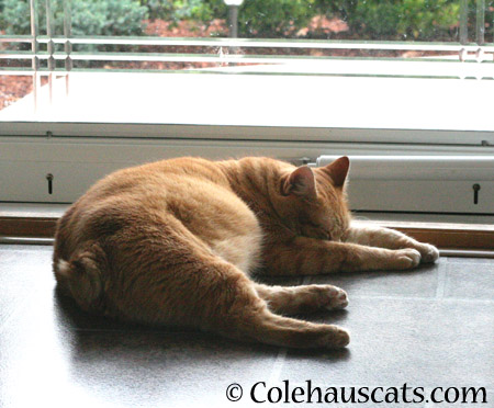 More Zuzu napping - 2014 © Colehaus Cats